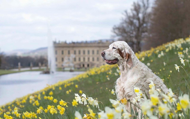 Travis Chatsworth House.jpeg