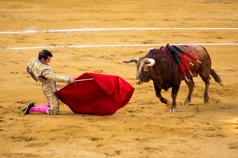 Bullfight14.jpg