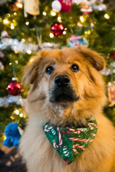 Mason's Christmas 2014