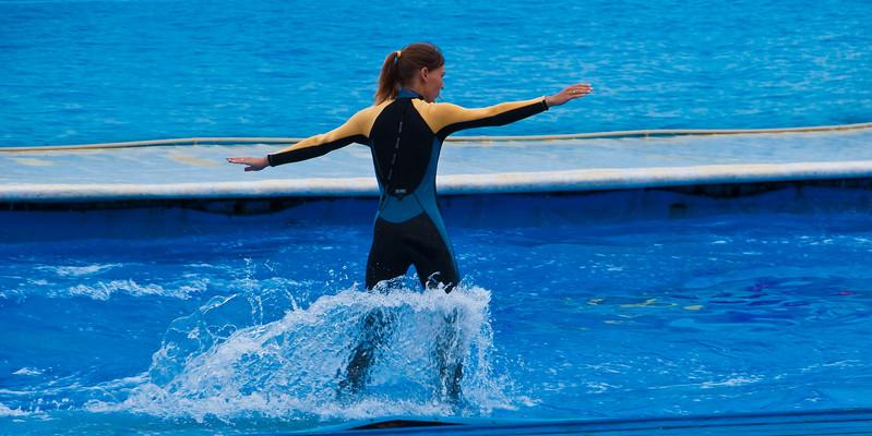 Dolphin rider