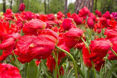 2014-04-Tulip forest arboretum