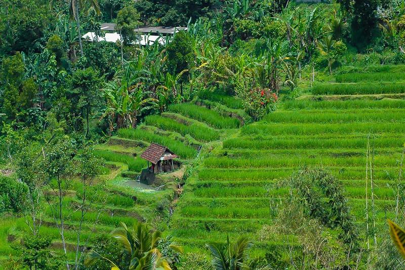 Bali Indonesian