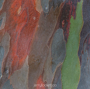 Abstract and Texture