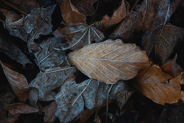 Nature Textures