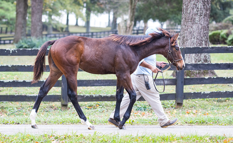 Mastery - Exogenetic at Indian Creek Farm 10.29.19.