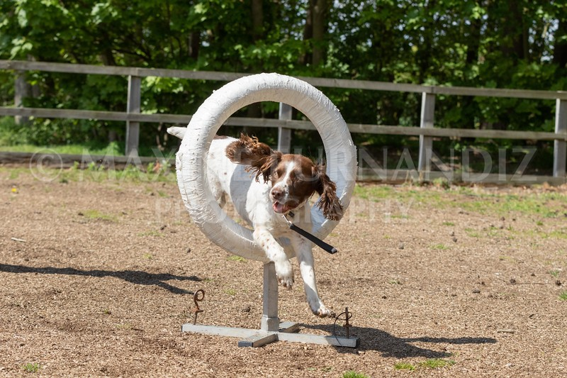Dogs-8032.jpg