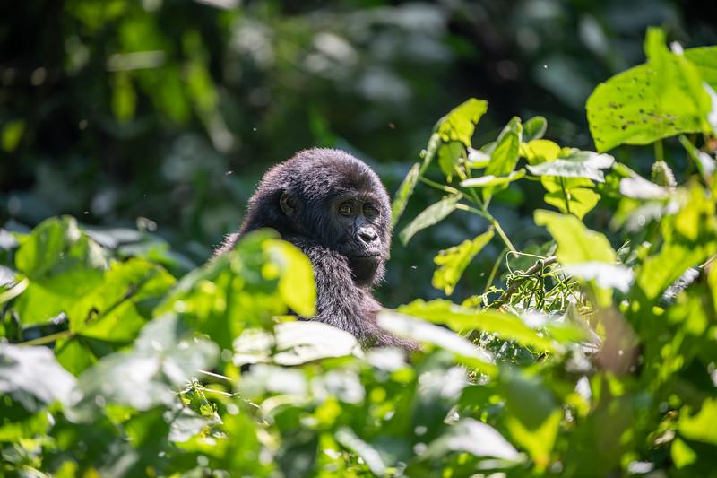 Uganda_T_Gor-2098.jpg