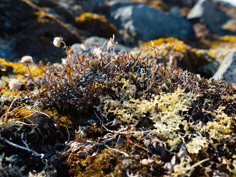 Bylot Island-1030716.jpg