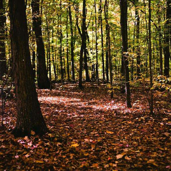 Autumn Hike 120 Film-00030.jpg