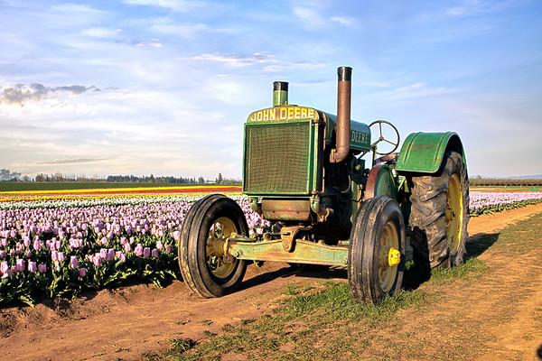 Wooden Shoe Tulip Farm