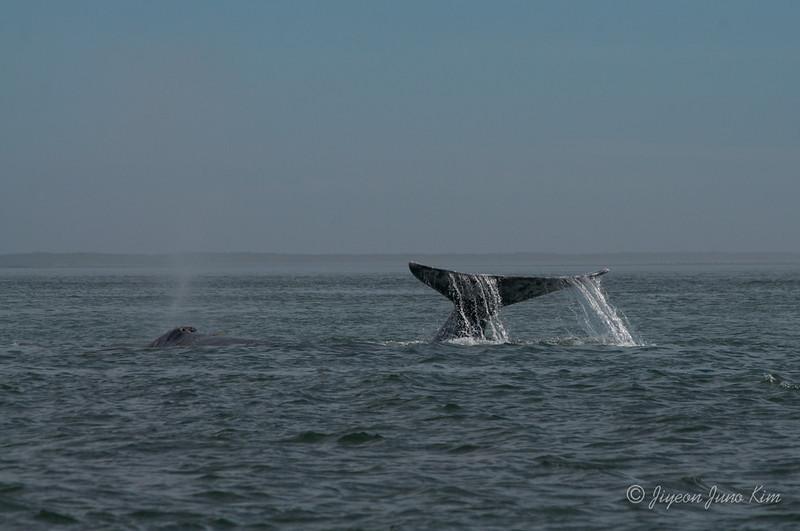 Mexico-Loreto-Whale-2430.jpg