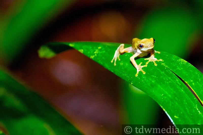 Costa Rica Tourism Board 5.jpg