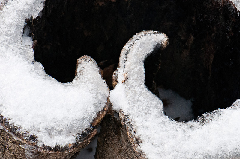 cut stump with cool detail made more noticeable with ice edges