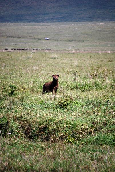 Ngorongoro (164).JPG