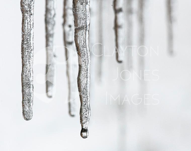 wf_backyard_snow_13.jpg