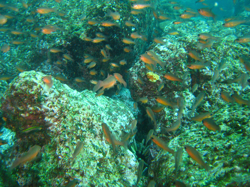 Diving in the Galapagos (93 of 392)