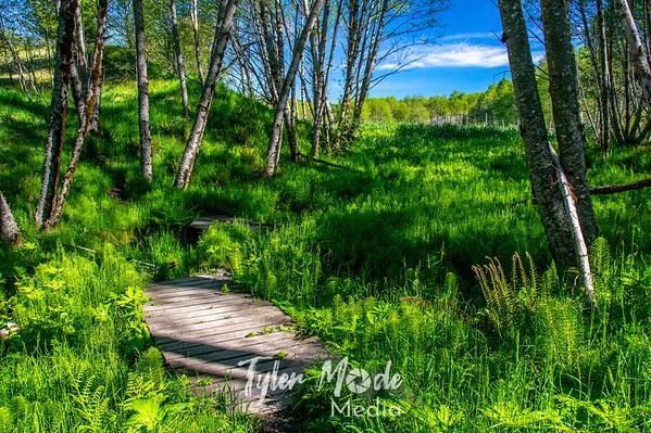 5.27.20 Hummocks Trail