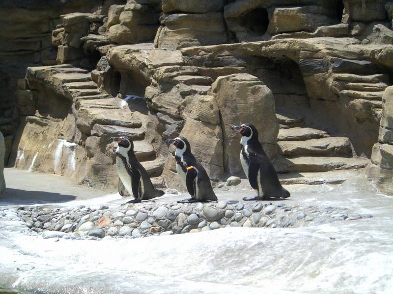 Penguins.  Zoo trip with Grandmama Carol, Papa Ben, Whitney, Kimber and I (June '09).