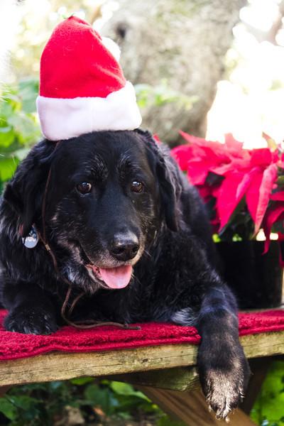 Sis Holiday Pets 2011