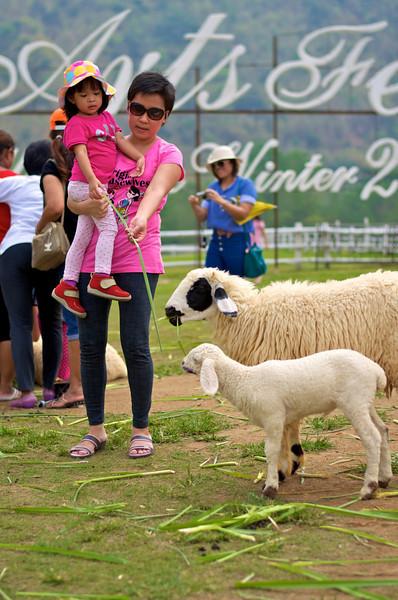 Sheep!!!.jpg