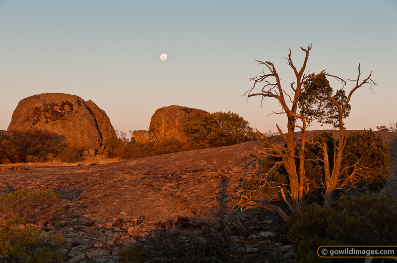Sunset and moonrise on the granite outcrop of Mt Terrick Terrick, Terrick Terrick NP