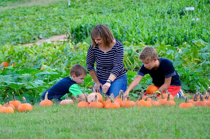 pumpkin - 14.jpg