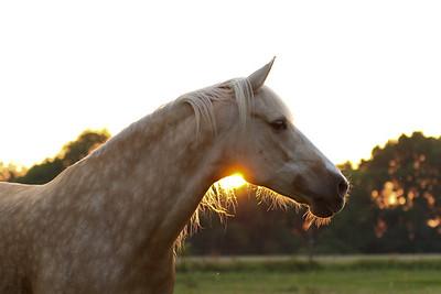 Horse Portraits