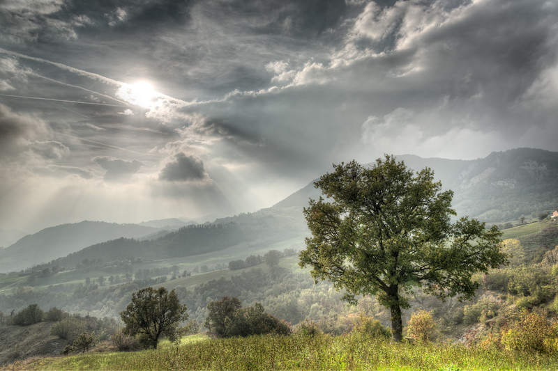 Lonely Tree - Carpineti, Reggio Emilia, Italy - October 19, 2014