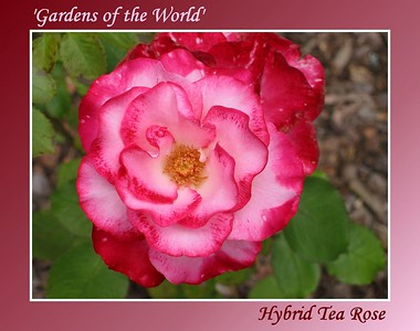 'Gardens of the World'