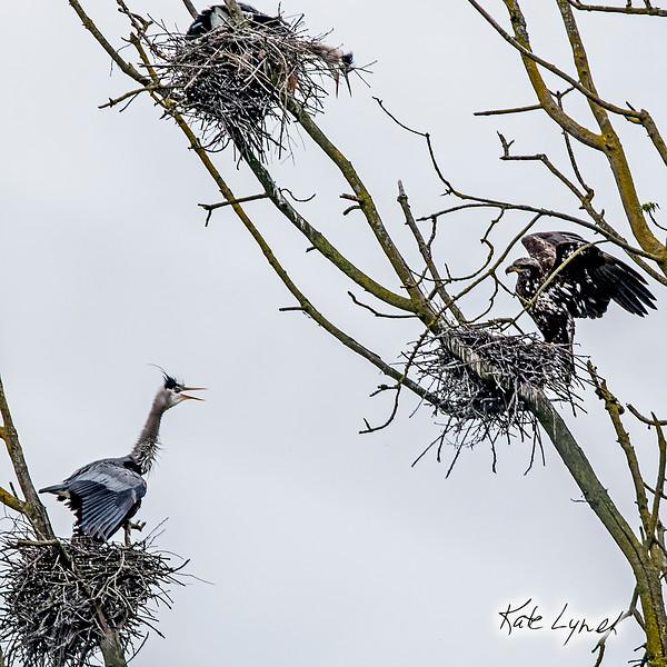 HeronEagle.jpg