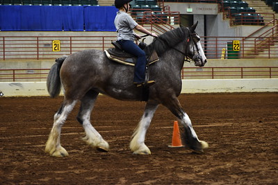 6 youth obstacle under saddle