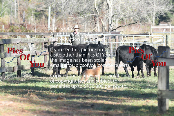 Black Prong Herding Trials Dec 2018