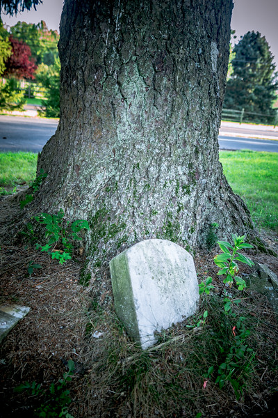 Tree'd.jpg