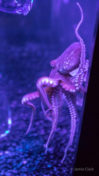 New England Aquarium - Winter Break in Boston 2016-17