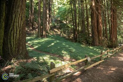 2018 Urban Coyote Oakland Redwoods