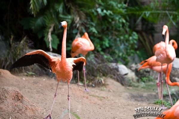 May 2009 Audubon Zoo