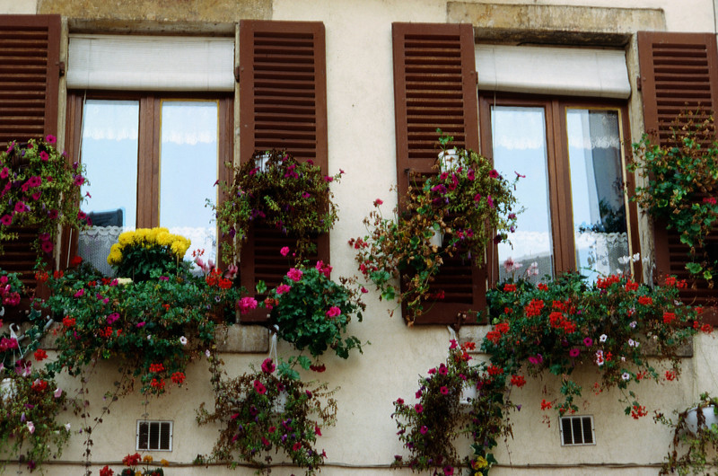 Window Boxes in Burgundy