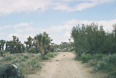 Arthur B. Ripley Desert Woodland State Park: Trips