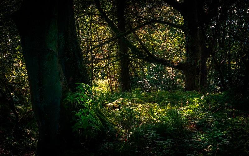 Forest Shadows-120.jpg