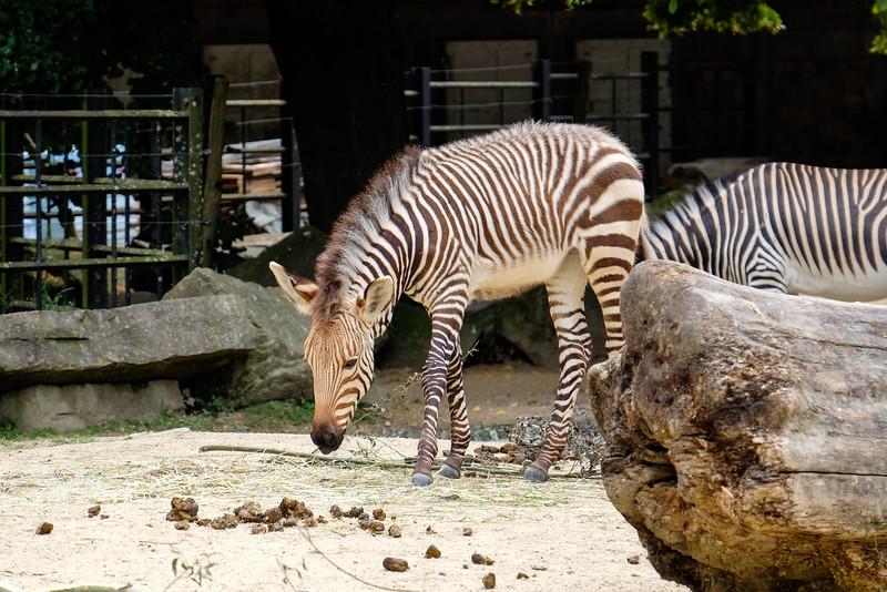 zoo_2016_040.jpg
