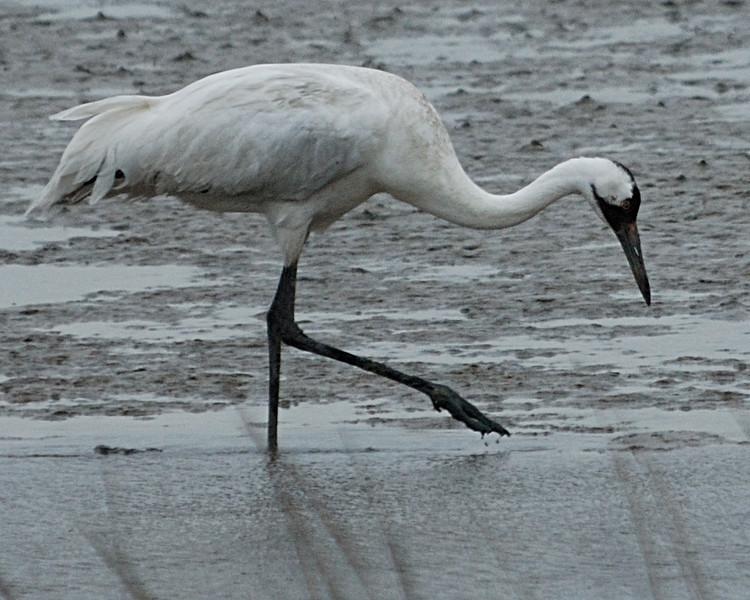 Aransas Wildlife Refuge 012009_0121a.jpg