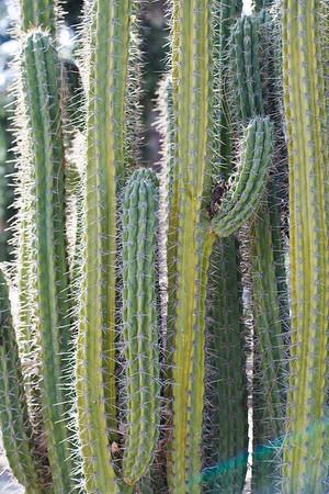 2009 Stanford Cactus Garden