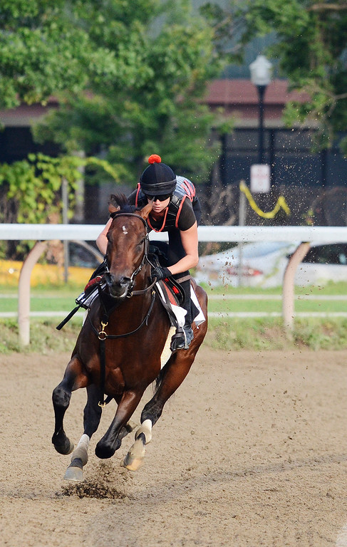 . Exercise rider Jen Patterson sits atop Kentucky Derby winner Orb Aug 19, 2013 after his final major work on the Oklahoma Training Center track in Saratoga Springs, N.Y. Orb will compete in Saturday\'s Travers Stakes at the Saratoga Race Course.Photo Erica Miller/The Saratogian 8/19/13 Orb1