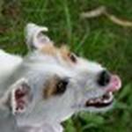 farley pups 052-2.jpg