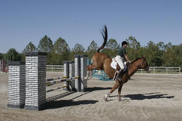 KMF Horses