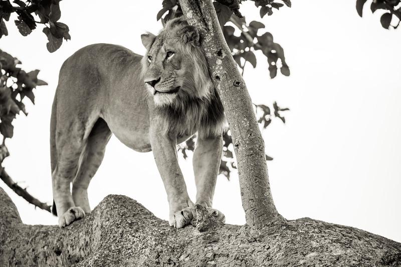 Uganda_T_QE-781.jpg
