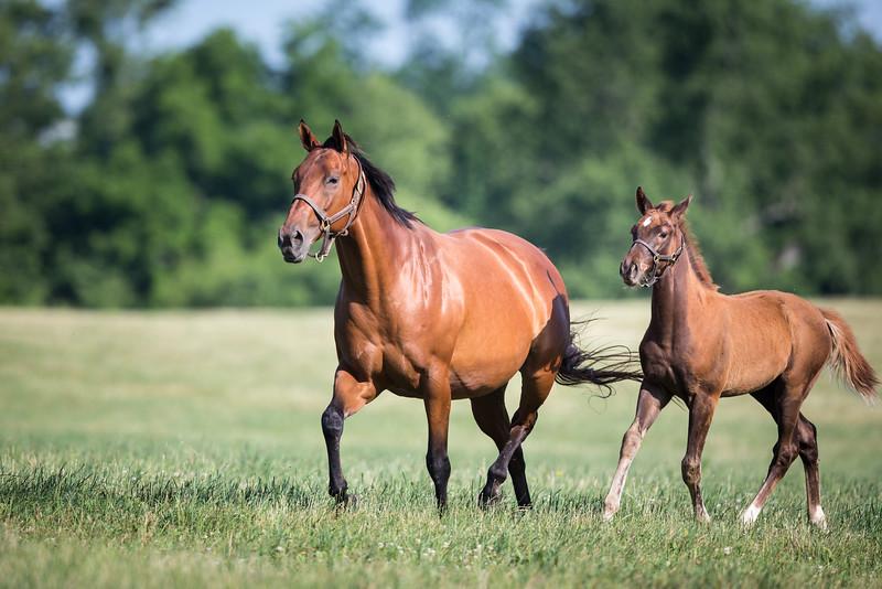 15_0615_AgaKhanmare&foal_ww-1108.jpg