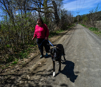 Dog walking on the West River trail - 050619