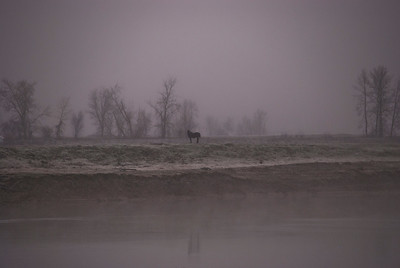 Horse In The fog -