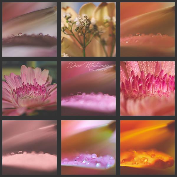 Floral Triptych-Edit.jpg